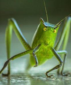 Diverse hvirvelløse eksotiske insekter